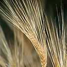 Wheat Heads by Jerry Walter