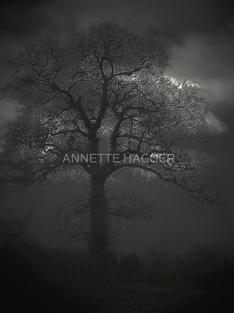 TREE  AT NIGHT by ANNETTE HAGGER