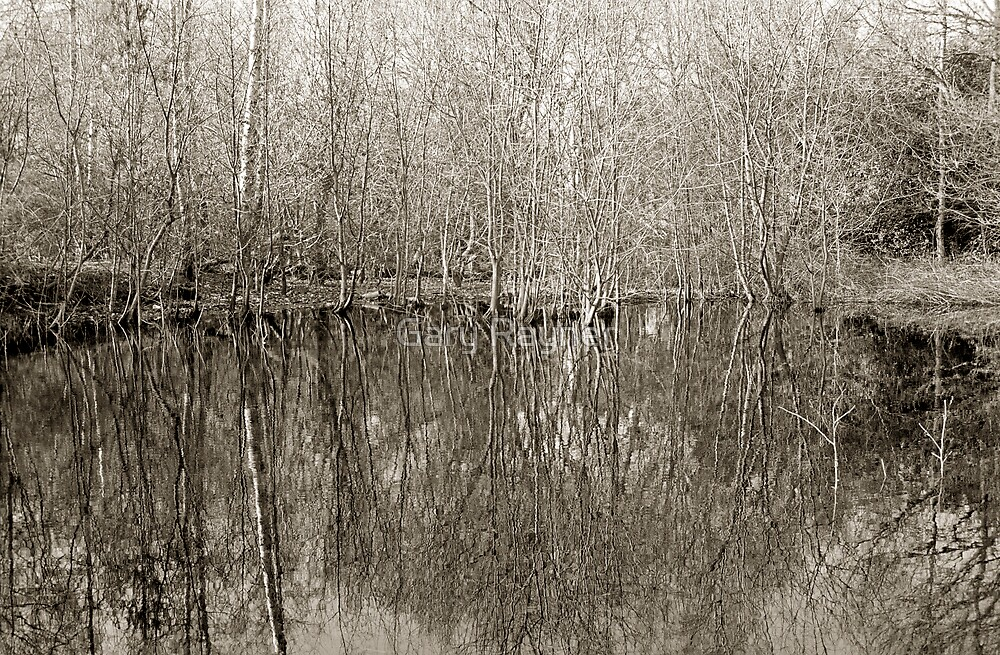 Mirrored Forest (2), Epping, UK by Gary Rayner