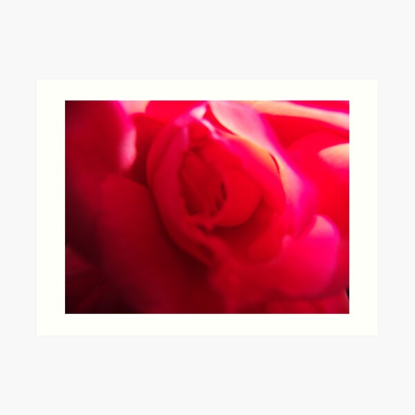 Rose Swirl Art Print