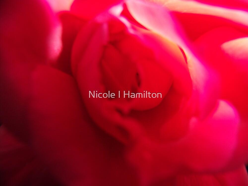 Rose Swirl by Nicole I Hamilton