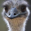 Emu portrait by Steve Bullock