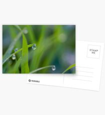 Water Droplets Postcards