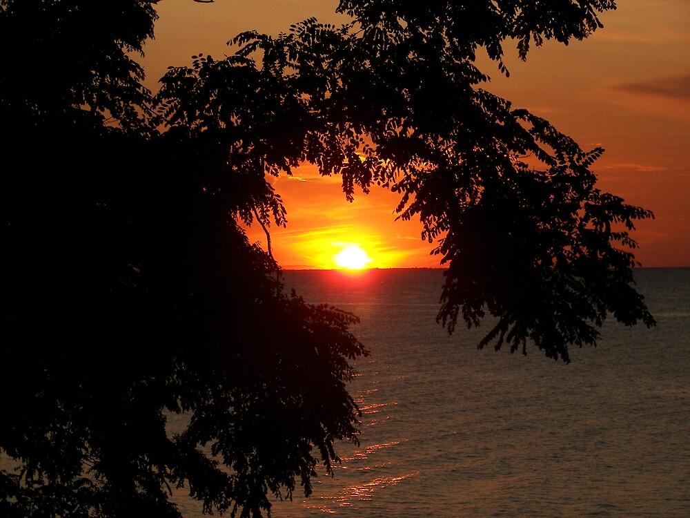 Webster Park Sunset by madmac57
