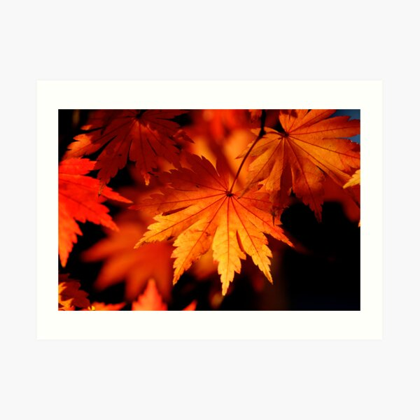 Leaves On Fire Art Print