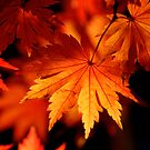 Leaves On Fire by Bobby McLeod