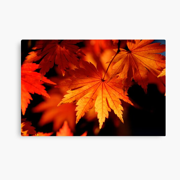 Leaves On Fire Canvas Print