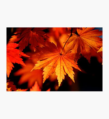 Leaves On Fire Photographic Print