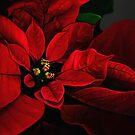 Poinsettia by Lois  Bryan