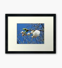 Malus with Sky Framed Print