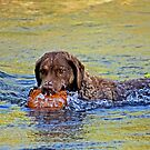 A Dog's Life by Sue  Cullumber