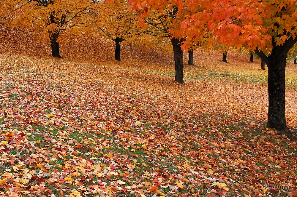 leaf in the park by dc witmer
