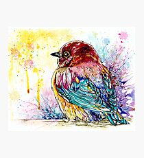 """Dandelion"" Chubby Baby Bird Photographic Print"
