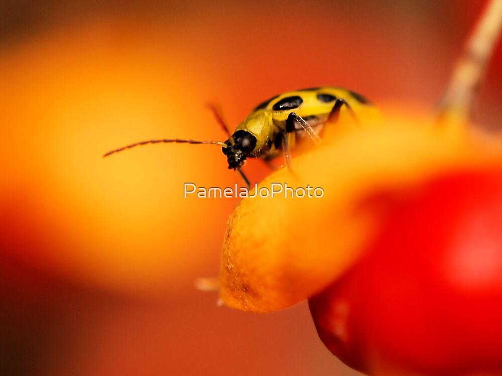 Cucumber Beetle by PamelaJoPhoto