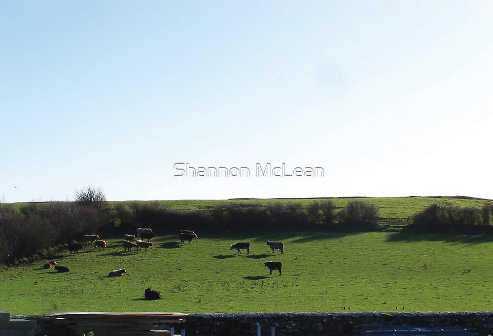 Irish Cows :) by shanmclean