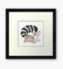 Ringtail Framed Print