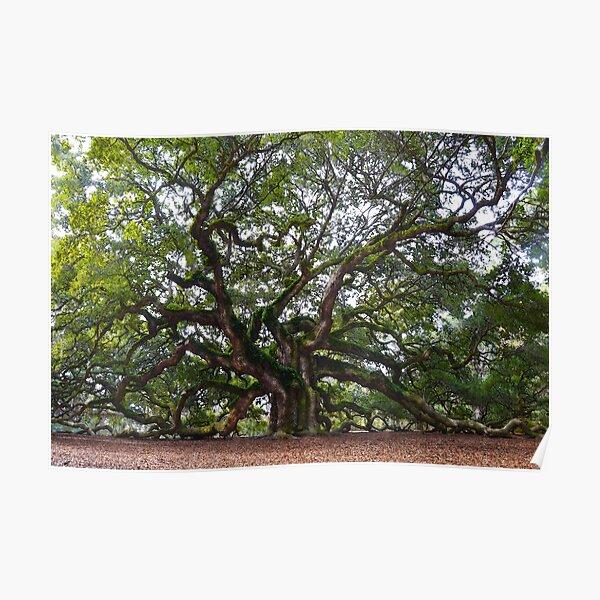 Angel Oak in South Carolina Poster