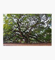 Angel Oak in South Carolina Photographic Print