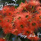 Pink Ficifolia - Christmas  by Bev Pascoe