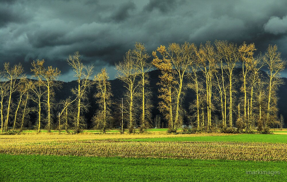 Autumn Drama by imarkimages