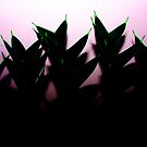 Needle Tips by Benjamin Nitschke