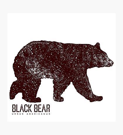 Black Bear Walking Photographic Print