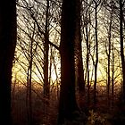 Sunset Through the Trees by craig-reeves