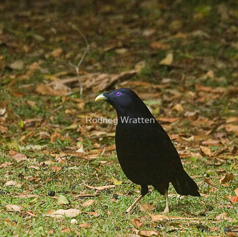 Birds by Rodney Wratten