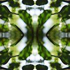 «Caleidoscopio de la naturaleza 6» de Rachael Martin