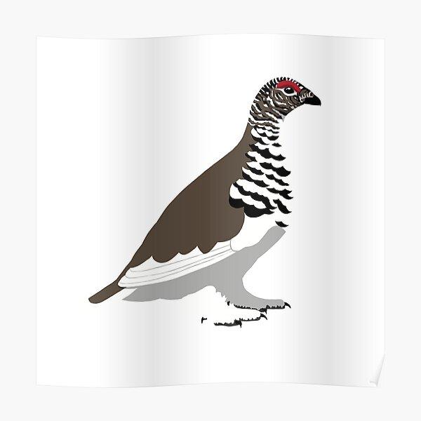 White-tailed Ptarmigan Poster