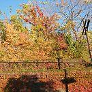 October Sixth Street Embankment Autumn Colors, Former Pennsylvania Railroad Embankment, Jersey City, New Jersey by lenspiro