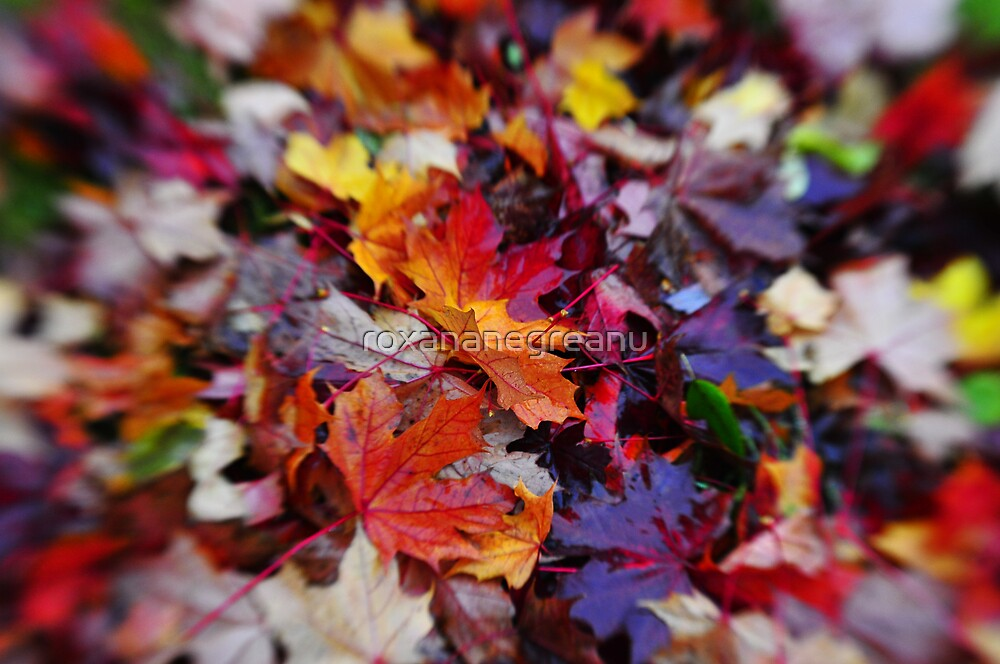 Passionate Fall by roxananegreanu