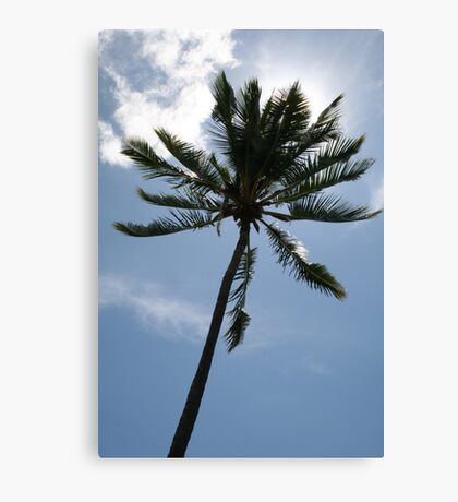 Palm in Sun Canvas Print