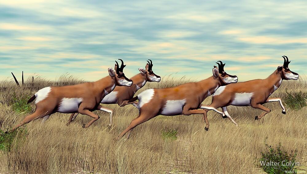 Prairie Pronghorn by Walter Colvin