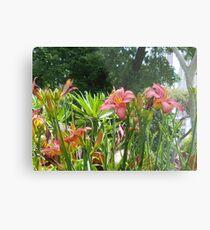 Pink Orchid  Metal Print