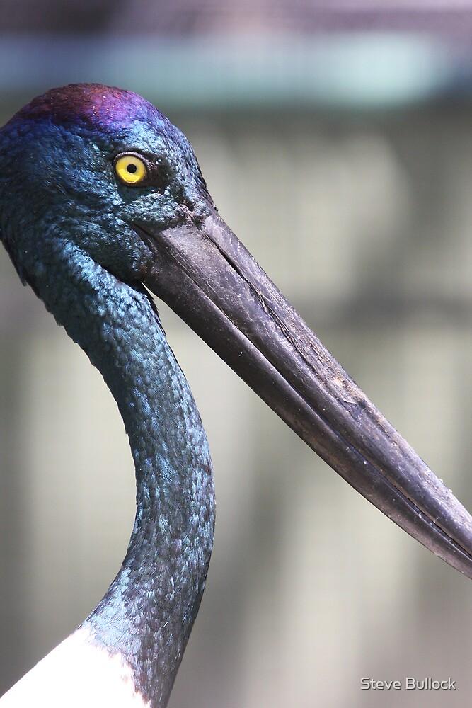 Black Necked Stork by Steve Bullock