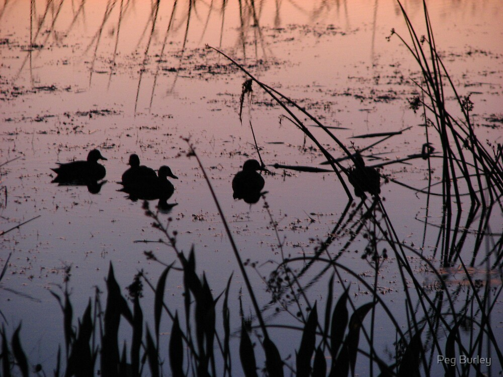 Sunset Ducks by Peg Burley