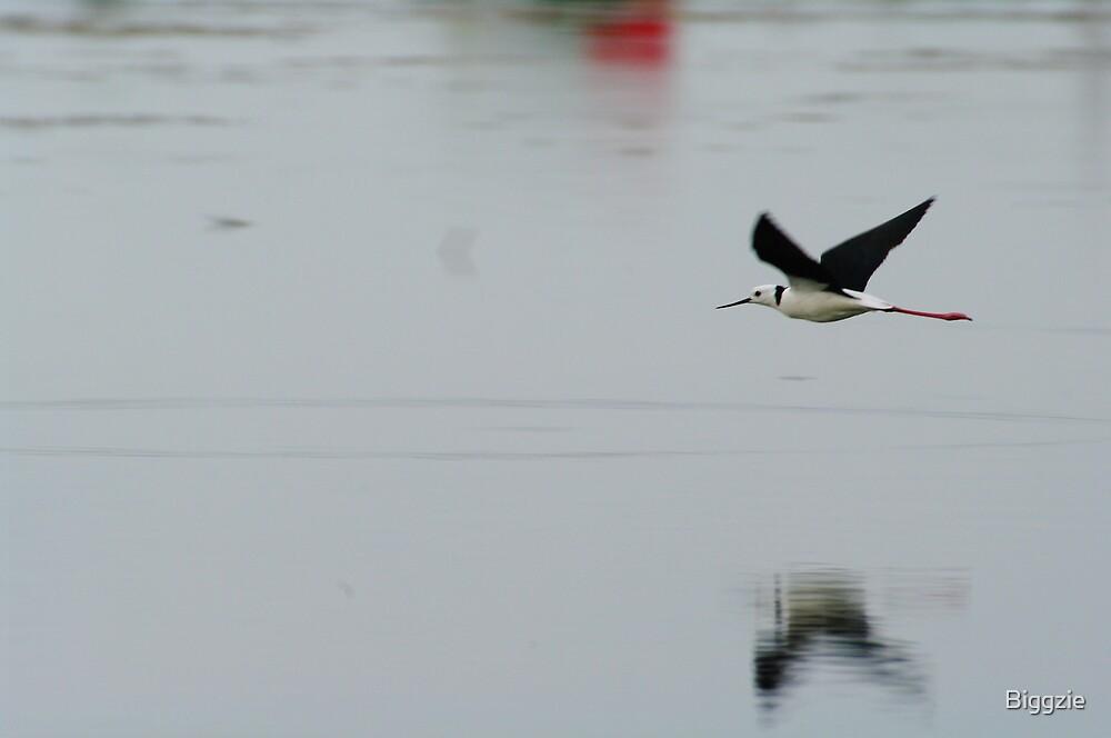 Black-winged Stilt 9 by Biggzie