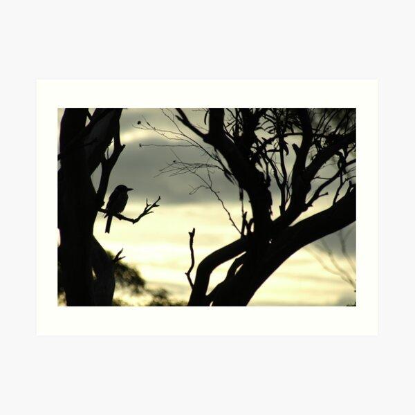 Butcher bird silhouette Art Print