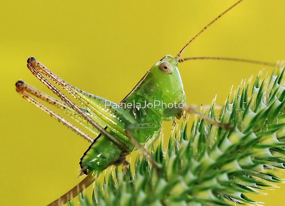 Green Jewel by PamelaJoPhoto