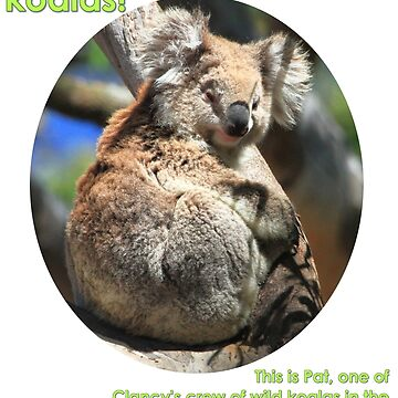 I'm helping wild koalas - Pat by koalajanine