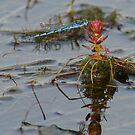 Damsel Flies 1 by Biggzie
