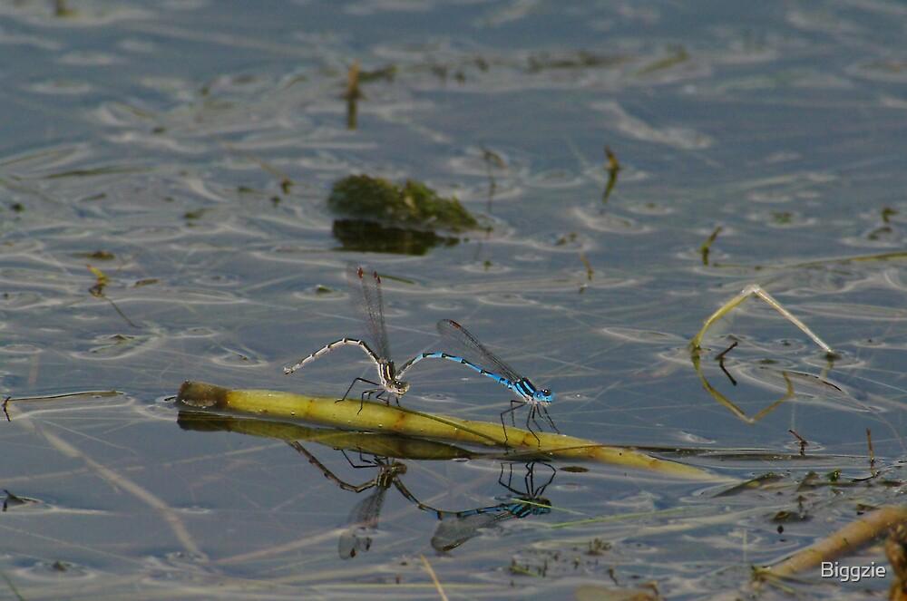 Damsel Flies 7 by Biggzie