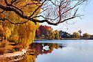 Autumn Pond  by Elaine Manley