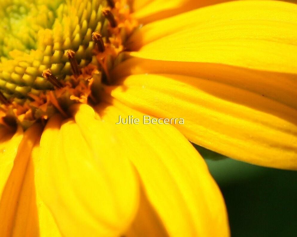 Hidden Gold by Julie Becerra