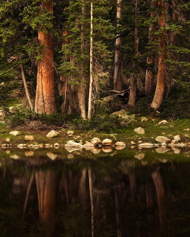 forest by Rachel  McKinnie