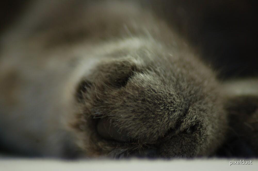 cats paw by pixeldust
