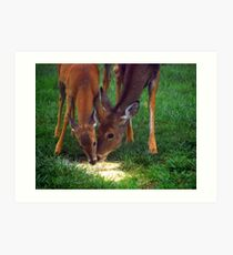 Mother and Fawn  Art Print