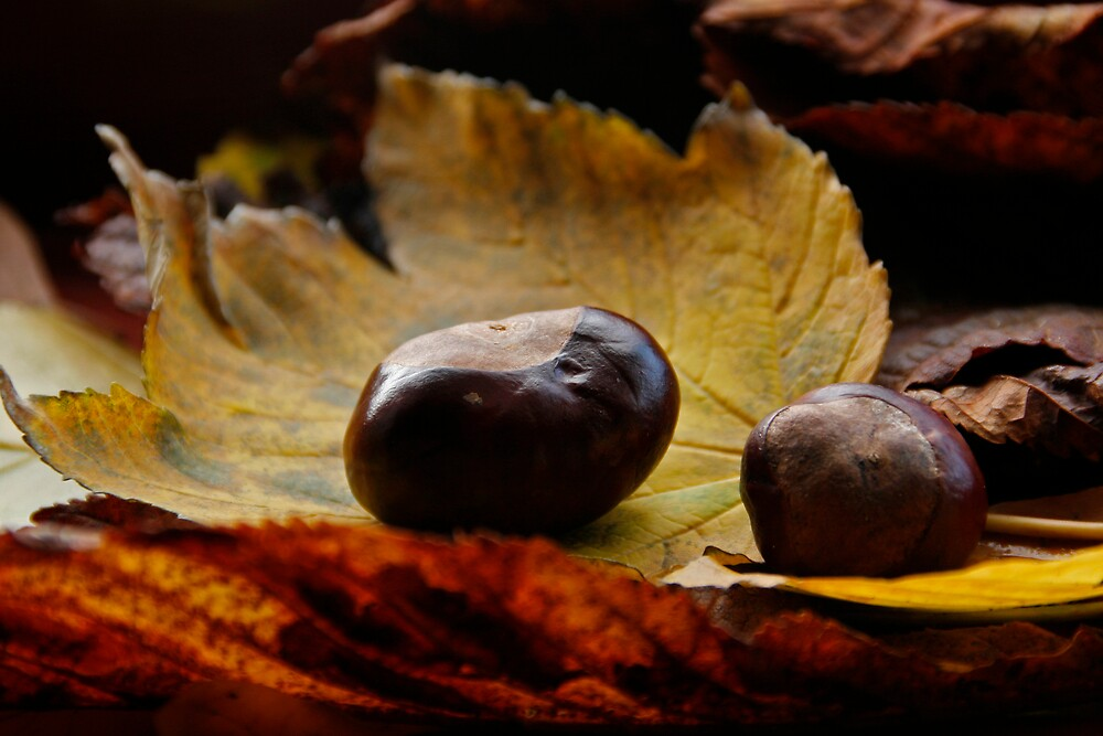 Autumn by Ann Heffron