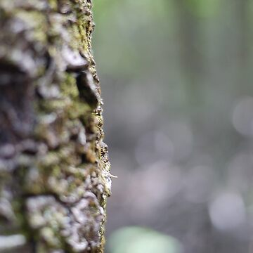 Tree With A Bit of Bokeh by lachalexander